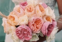 Weddings / by Nancy Falcone