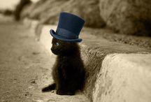 Awww / Hayao Miyazaki makes my heart happy, as do kittens and the like. / by Joe Green
