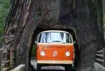 VW Campers and Beetles (old skool)