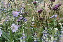 Tuinideeën / Inspiratie voor onze tuin / by Loes Smit