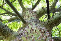 Trees (Bome)