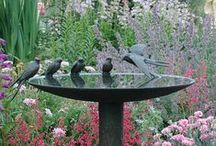 Birds: Water bowls / baths