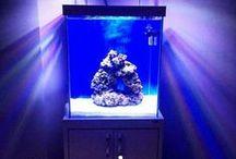 Aquaplazma Akvaryum Modelleri / Aquaplazma ;  Özel ölçülerde tasarım akvaryumlar projeye usulu tonajlık akvaryum çalışmaları ve periyodik akvaryum bakımları ile hizmetinizdeyiz.  denizakvaryumcu.tayfun@hotmail.com
