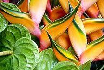 Plants: Shade lovers
