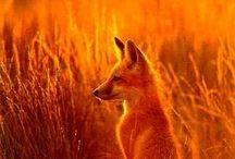 Orange / Strength, power, beauty, energy. Orange.