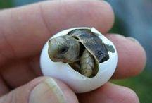 avec des tortues