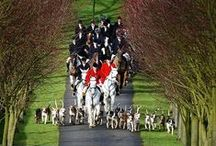 Fox Hunting / Beautiful photography, facts and information etc.