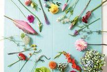 Flowers / Shamelessly downloaded :P Flowers, flowers, flowers :D