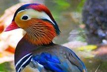 Stunning Photography, including flora & fauna
