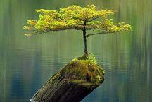 strange and beautiful trees