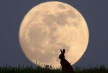 Bunnies / Conigli e cose da coniglio