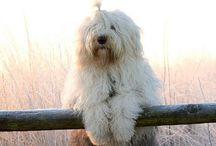 Dogs / Cani e cose da cani...