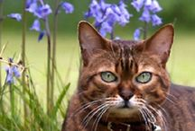 Everything Feline 6 / by Diane Kothrade