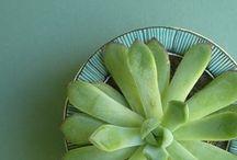 Succulentes mes plantes