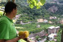 Amalfi Lemon Tour / Trip, tasting & Lemon Experience in Amalfi Coast