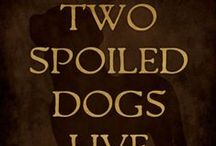 Saluki & Azawakh / Anything and everything saluki, azawakh & sight hounds