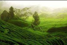 voyages autour du thé et du café / Profitons de ces paysages extraordinaires que nous offrent les cultures de thé et de café à travers le monde!