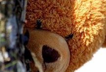 Bear with me! / by marilyn