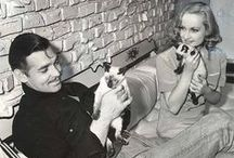 Movie celebrities and cats