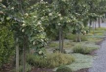 Gardens / Defined spaces with a romantic organic touch.