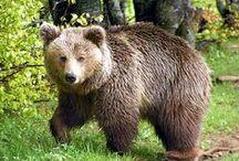 Pindus National Park - Valia Kalda