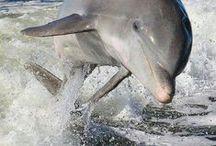 Miluju delfíny