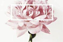 I n B l o o m / Spring is here again...