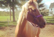 ~AQHA Proud~ / A progression of work with my AQHA palomino mare, Cowgirls R Tardy Too aka Missy