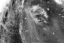 -|- Horse Photography -|-