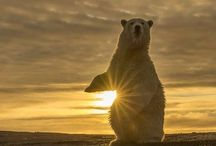 Bears / by Love