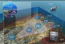 Ocean Infographics / Get the facts. Who doesn't like to know all the details? / by OceanaEurope