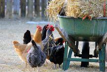 Les poulettes / by Johanne