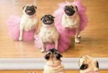 Hahahahah / Fun stuff, and many pugs...