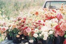 Springtime / Die Vögel zwitschern, die Blumen blühen- we love spring!