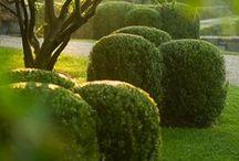 Garden dreams / Garden inspiration / by Janine MacLachlan   Rustic Kitchen