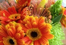 Flowers + Centerpieces / This board contains images and inspiration for creating floral arrangements and centerpieces for your table or entertaining. / by Krayl Funch / An Appealing Plan