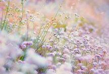 Spring / by Heidi Ohlander