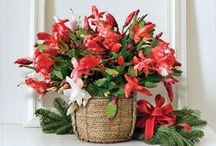 Holiday Gift Plants / These presents only grow more lovely as time goes by. A smart choice for every plant enthusiast.