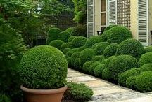 Garden dreams - boxwood love / Boxwood in the garden / by Janine MacLachlan | Rustic Kitchen