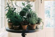 My Herb Garden / by Jackie@My Kitchen Addictions