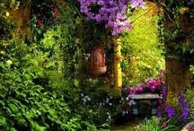 Garden / by Monica Gomez