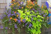 Garden / by Shana Siems