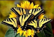 Butterflies / Winged Beauties / by Monica Gomez