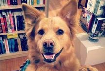WORD Brooklyn Hearts Dogs / We love the dogs that visit us in the store! So we make them internet famous (sorta).