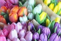 Flowers 💐🌸🌷🌹🌻🌺🍀 / by Tina Darigo