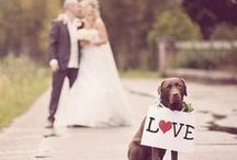 Animals at Weddings / Great pictures of animals looking cute at weddings
