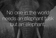 ELEPHANT / ELEPHANT