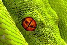 Reptiles / All things reptile