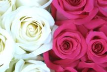 Wedding ideas / Flowers, bridesmaid, color ideas, wedding ideas / by Kaitlyn Obstfeld