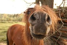 Ponies / The cute little critters